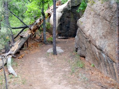 Cougar's Shadow at Cheyenne Mountain State Park