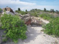 Trail in White Acres Near Colorado Springs