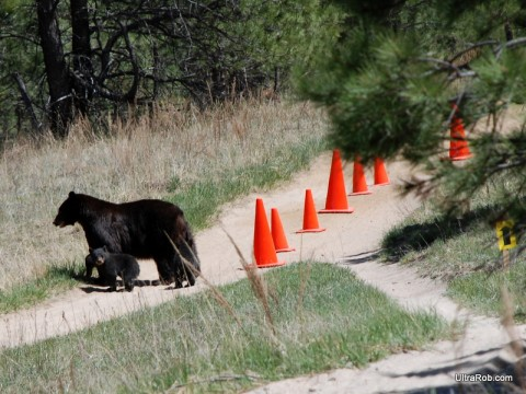 Bears at Mountain Bike Race in Palmer Park
