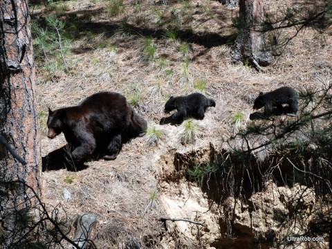 Bears at Palmer Park Mountain Bike Race