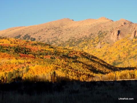 Fall Aspen Near Cripple Creek, CO