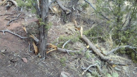 Illegal Trail Building in Garden of the Gods